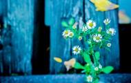 Flowers_300x300